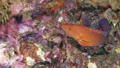 Photo of Skały w akwarium morskim