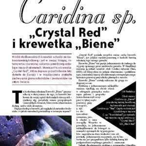 Caridina