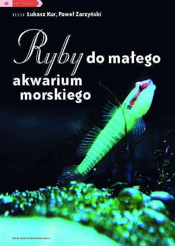 ryby do akwarium morskiego