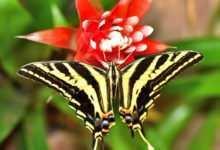 Photo of Skrzydlate piękno na wyciągnięcie ręki