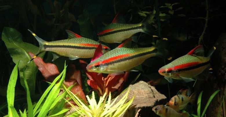 ryby do akwarium