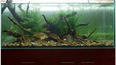 Photo of Akwarium roślinne – jak zacząć?