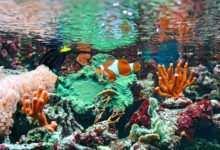Photo of Akwarium morskie na początek