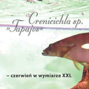 Crenicichla