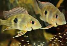 Photo of Wpływ żywienia na rozród ryb