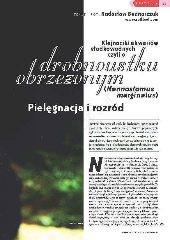 Drobnoustek obrzeżony (Nannostomus marginatus)