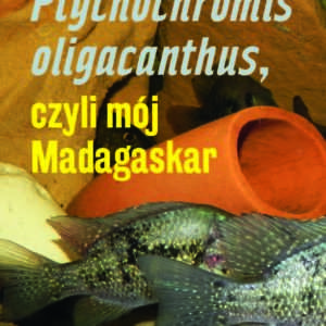 Ptychochromis oligacanthus