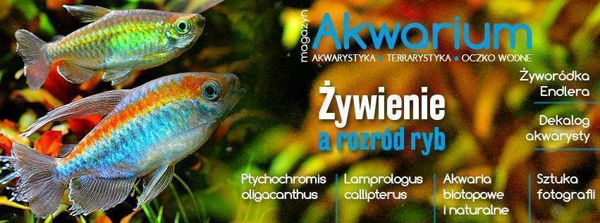 Magazyn Akwarium czasopismo 6/2019 (178)
