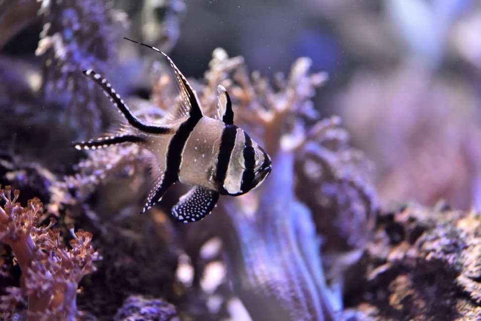 zlot morszczaków