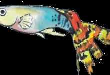 Photo of Dekalog hodowcy gupika (i nie tylko)