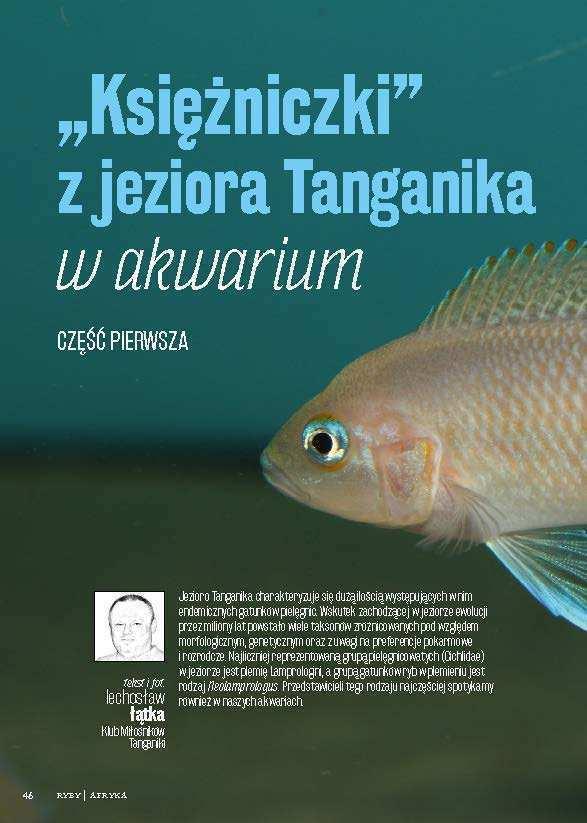 Tanganika akwarium