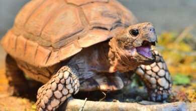 Photo of Chów i żywienie roślinożernych żółwi lądowych