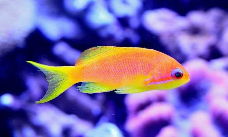 problemy w akwarium morskim