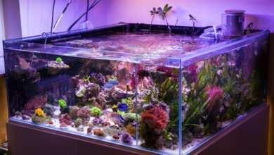 Photo of Akwarium morskie – marzenie, pasja, filozofia życia