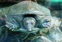 Photo of Chów i żywienie wszystkożernych żółwi wodno-lądowych