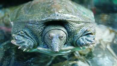 żółwie wodno lądowe