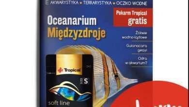 Photo of Magazyn Akwarium najlepiej kupić w redakcyjnym sklepie