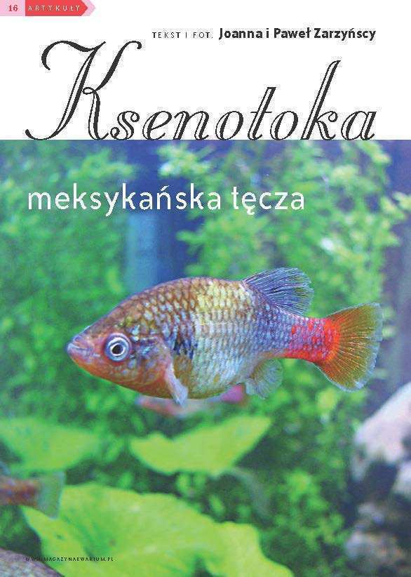 ksenotoka