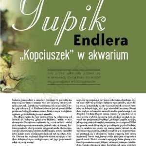 Gupik Endlera