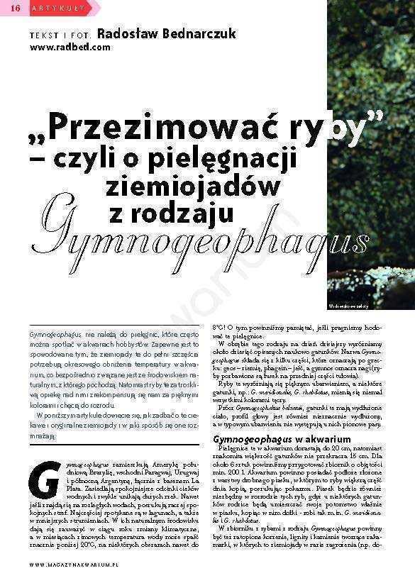 Gymnogeophagus