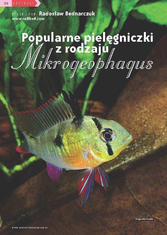 Mikrogeophagus