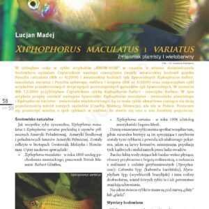 platki - małe rybki akwariowe