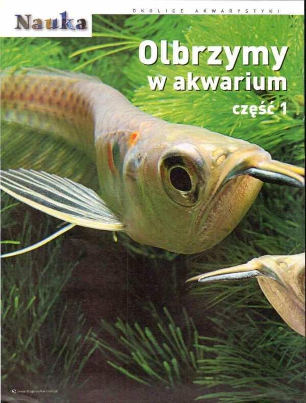 duże ryby akwariowe