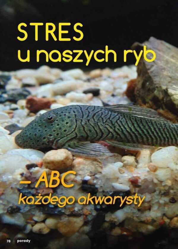 stres u ryb