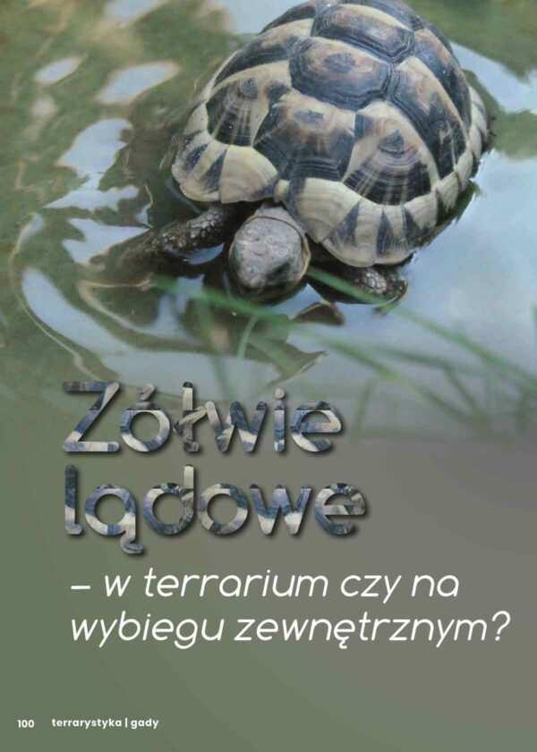 wybieg dla żółwi
