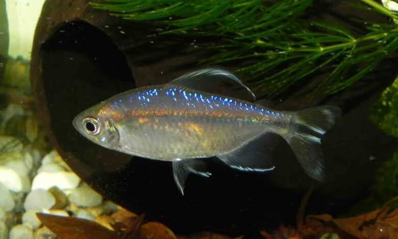 rozmnażanie ryb