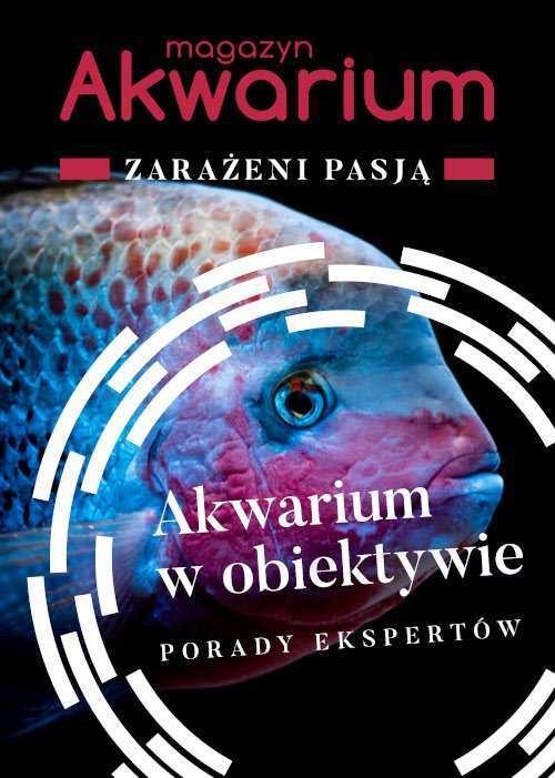 Jak fotografować akwarium i zwierzęta akwariowe