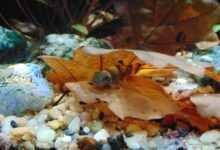 Photo of Stres u naszych ryb – ABC każdego akwarysty