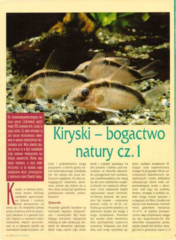 kiryski Corydoras
