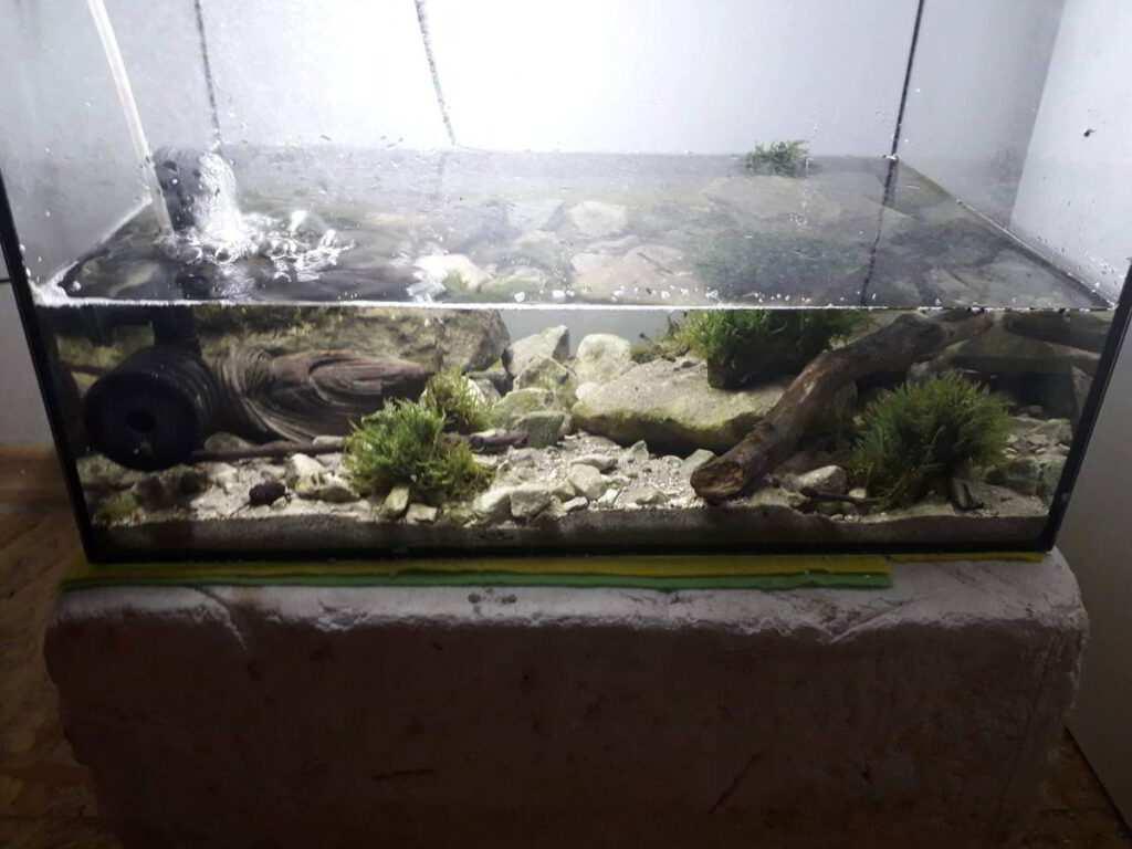 Akwarium Wojciech Biedacha