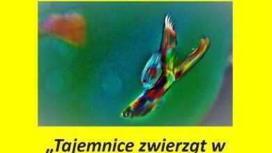 Photo of Tajemnice zwierząt w akwarium, terrarium i naturze