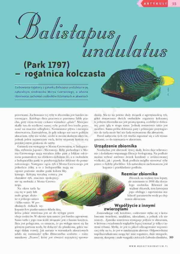 rogatnica kolczasta Balistapus undulatus