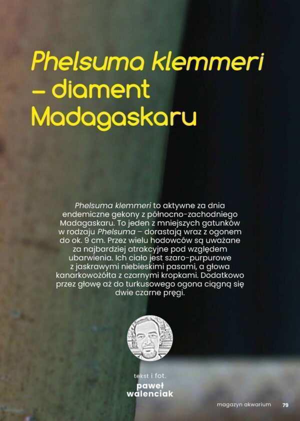 Phelsuma klemmeri