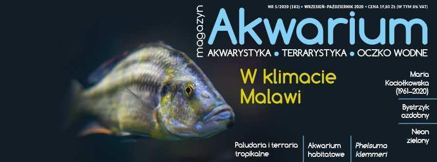 Magazyn Akwarium 5/2020