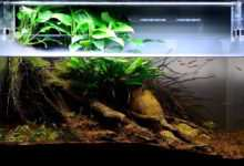 "Photo of Akwarium habitatowe – projekt ""Brzeg strumienia"""