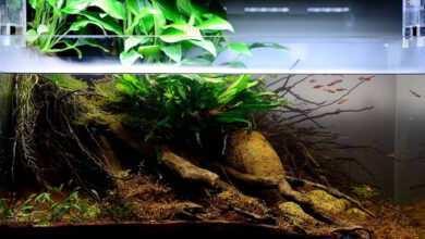 akwarium biotopowe
