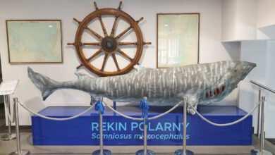 Photo of Muzeum Ichtiologiczne zaprasza