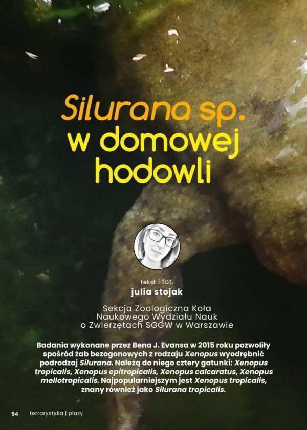 Silurana żaba