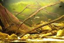 Photo of Liście w akwarium – co i jak stosować?