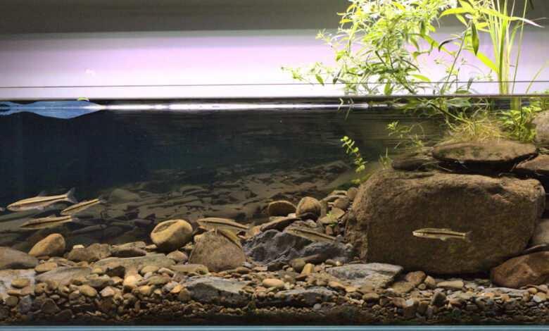 Vinny Anderson akwarium biotopowe