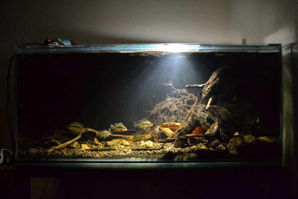 David Rodriguez akwarium biotopowe