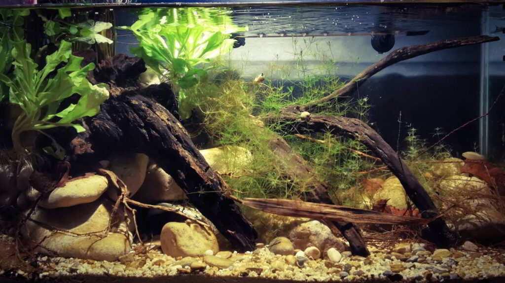 Alejandro Rios Martin akwarium biotopowe