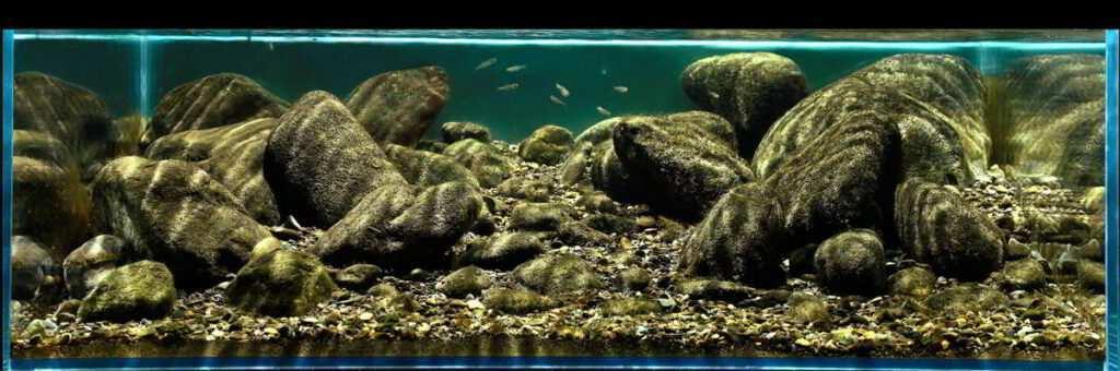 Yang Erwa akwarium biotopowe