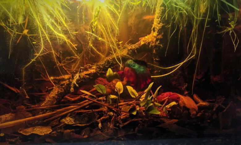 rybki akwariowe akwarium dla bojownika
