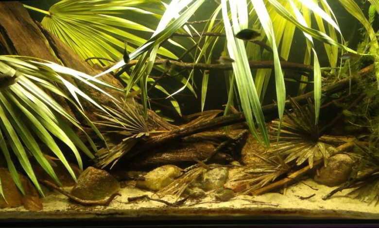 liście w akwarium dekoracje akwariowe