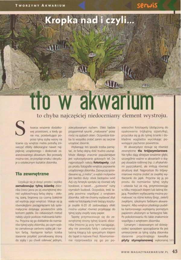 aranżacja akwarium akwarium dla początkujących